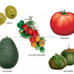 fruit-vegetable