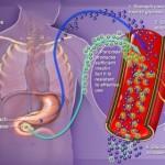 metformin-and-diabetes
