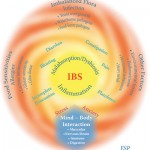 ibs-low-res